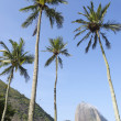 Stock Photo: Sugarloaf Mountain Rio de Janeiro Brazil with Palm Trees