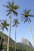 Sugarloaf Mountain Rio de Janeiro Brazil with Palm Trees — Stock Photo