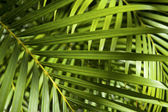 Bright Green Tropical Palm Frond Background — Stock Photo