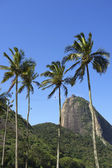 Sugarloaf Mountain Rio Brazil Palm Trees — Foto de Stock