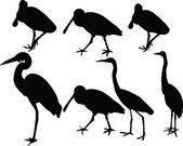 Herons collection - vector — Stock Vector
