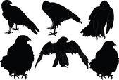 Collezione di falco - vettoriale — Vettoriale Stock