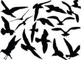 Seagull collection - vector — Stock Vector
