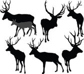 Deer collection - vector — Vector de stock