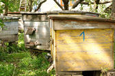 Several bee house in spring country place — Stock Photo