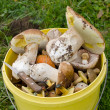 Royalty-Free Stock Photo: Bucket of mushrooms