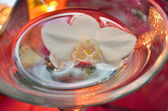 Orchid flower floating in water in a glass bowl — Foto de Stock