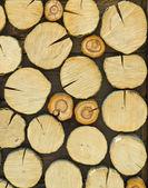 различные разделы дерева — Стоковое фото