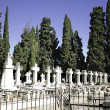 Cemetery with cypresses — Stock Photo