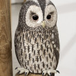 Stock Photo: Night Owl