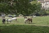 Atları ile alan — Stok fotoğraf