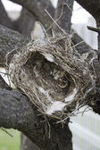 Bird nest on tree — Stock Photo