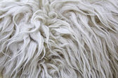 Wool Skin — Stock Photo