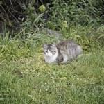 Wild cat in nature — Stock Photo