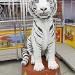 Stock Photo: Circus Tiger