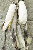 кукурузные початки — Стоковое фото
