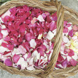 rose petals — Stock Photo