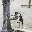 Cat drinking water — Stock Photo