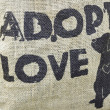 Animal Adoption — Foto Stock