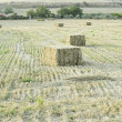Bales in Field — Stock Photo