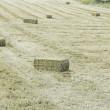 Field of wheat and straw — Stock Photo