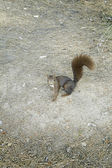 Squirrel in park — Stock Photo