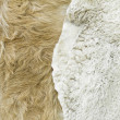 Stock Photo: Goat fur skins