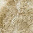 Stock Photo: Goat skins brown