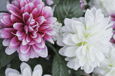 Striking decorative flowers — ストック写真