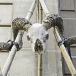 Male goat skull — Stock Photo #38088965