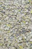 Autumn leaves park — Stock fotografie