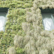 Building with vegetation — Stock Photo