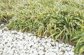 Vegetation with stones — Stock Photo