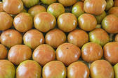 Group tomatoes — Stock Photo