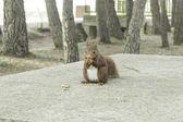 Squirrel in park — Stock Photo