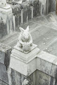Rabbit in Sintra Castle — Stock Photo