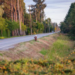 Rural Road — Stock Photo #12770001