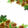 Spruce branches — Stock Photo #14576451