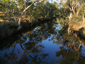 Creek - a rarity in australian outback. Australia, Queensland. — Stock Photo