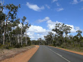 Landscape of eucalyptus wood with road and very blue sky. Western Australia, near Augusta. — Stock Photo