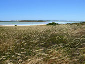 Salty lakes with cereal sparkled herb near Robe, South Australia. — Stock Photo