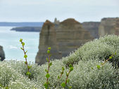 The flowers (the lichen and green escapes) on background Twelve Apostles. Australia, Victoria, Great Ocean Road. — Stock Photo