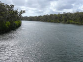 Bright and cool landscape of river with gloomy wood. Western Australia, near Augusta. — Стоковое фото