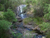 The creek in very thick eucalyptus wood. Western Australia, near Albany. — Stock Photo