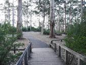 Fairytale, saturated by romantic light eucalyptus grove. Western Australia, Pemperton. — Stock Photo