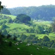 Lush green mountain pasture. — Stock Photo