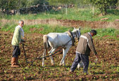 Turkish men are strangers on the plow pulled by a horse and sypyat seeds. Agriculture in Turkey, Gaziantep - November 4, 2008. — Stock Photo