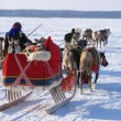 Northern residents in national costumes. Reindeer pulling sleds. National holiday. — Foto Stock #37185697