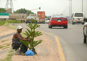 An unknown man sells live Christmas tree on the road. Road with cars. New Year. — Stock Photo