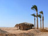 Schutz der Palme Blätter in der Wüste. — Stockfoto